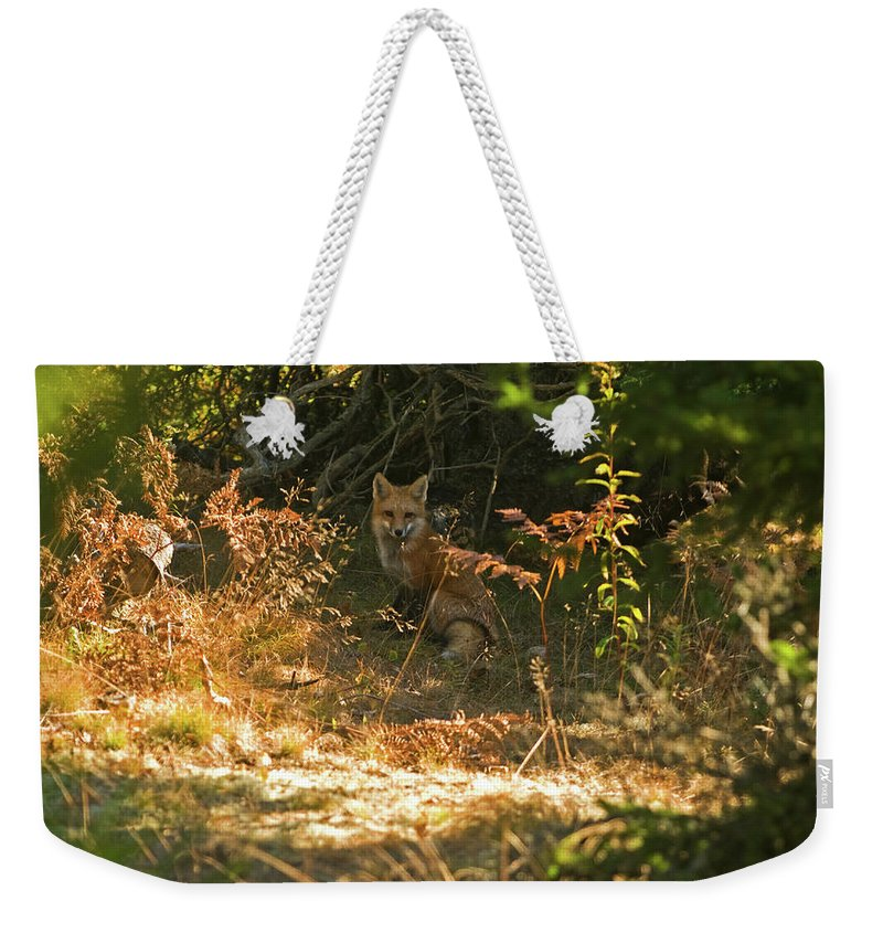 red Fox Weekender Tote Bag featuring the photograph Cover Shot by Paul Mangold