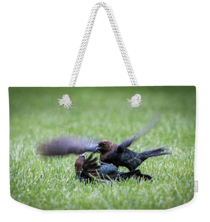 Bird Weekender Tote Bag featuring the photograph Cow Bird Fight by Patti Deters