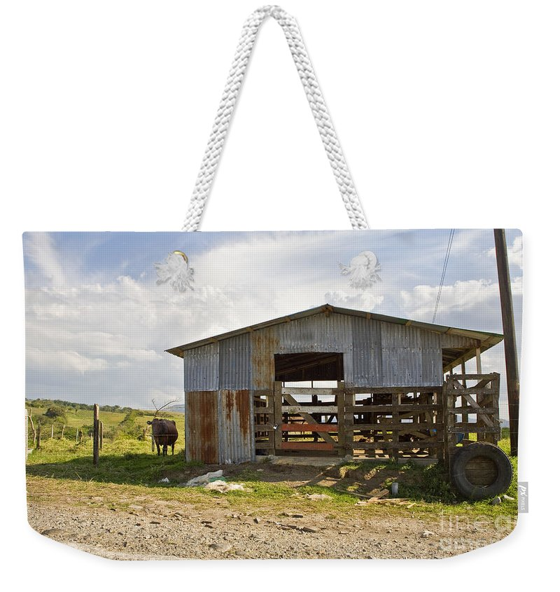Cow Weekender Tote Bag featuring the photograph Cow In The Pasture by Madeline Ellis