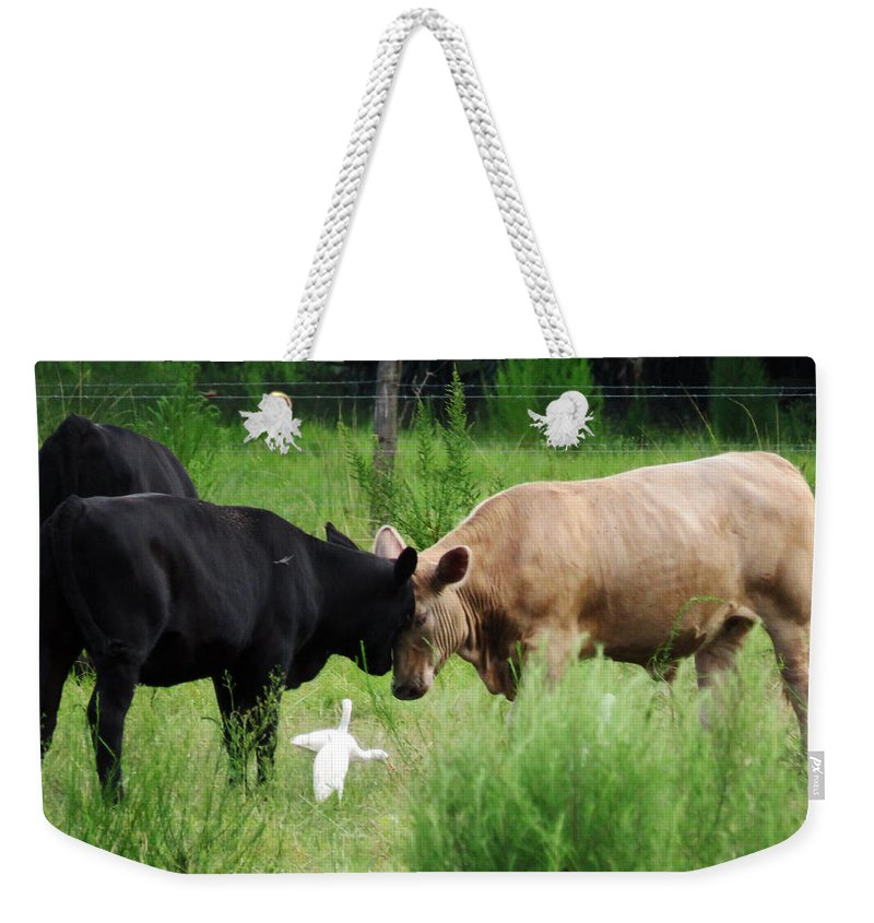 Animal Weekender Tote Bag featuring the photograph Cow Playing Head Games by Mario Carta