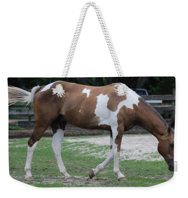 Horse Weekender Tote Bag featuring the photograph Cow Spotted Horse by Rob Hans