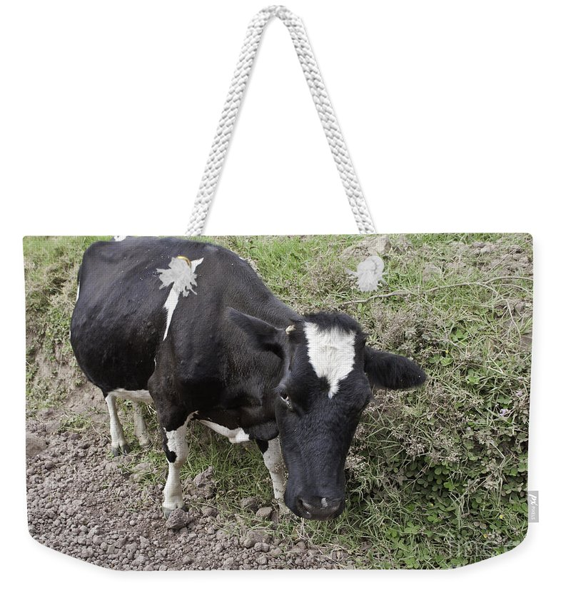 Cow Weekender Tote Bag featuring the photograph Cow Tow by Madeline Ellis