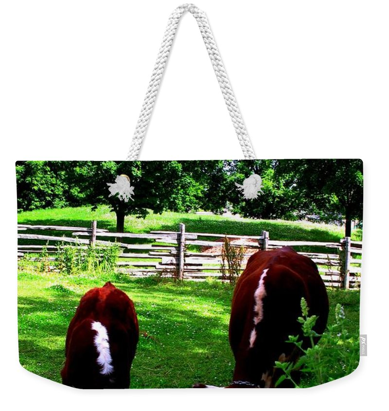 Cows Weekender Tote Bag featuring the photograph Cows Grazing by Ian MacDonald