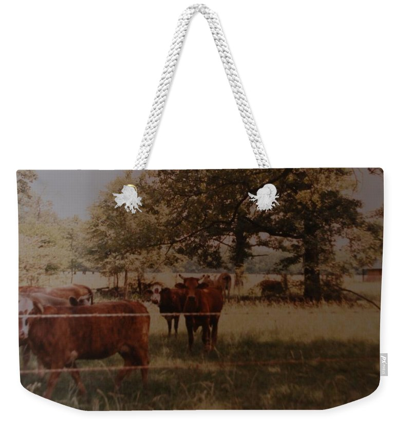 Cows Weekender Tote Bag featuring the photograph Cows by Rob Hans