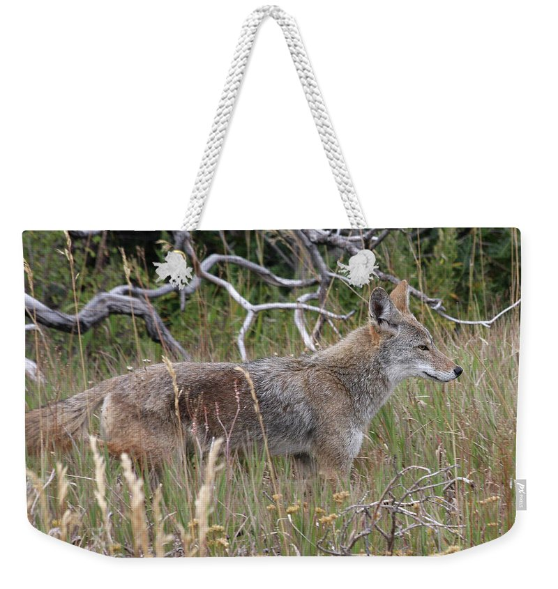 Coyote Weekender Tote Bag featuring the photograph Coyote by Doris Potter