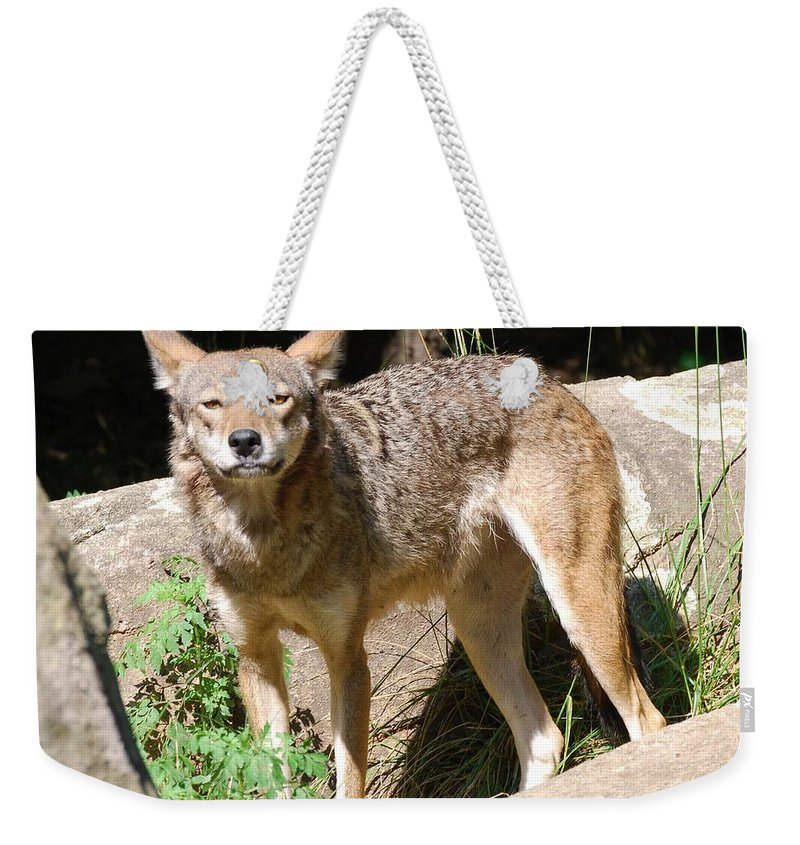 Coyote Weekender Tote Bag featuring the photograph Coyote Grin by Eric Liller