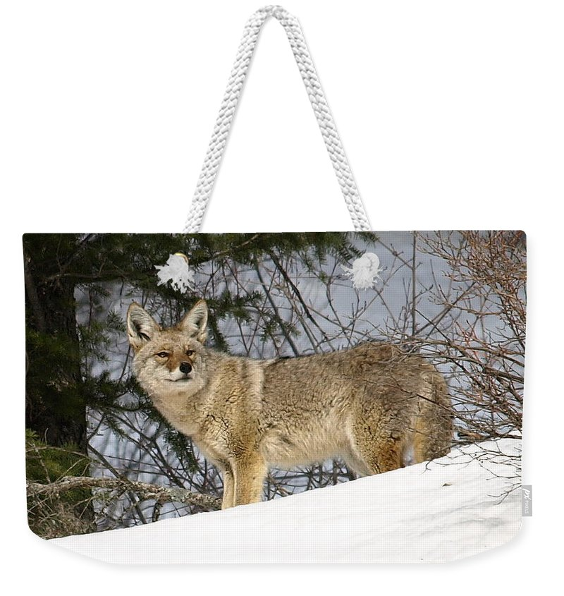 Coyote Weekender Tote Bag featuring the photograph Coyote In Winter by DeeLon Merritt