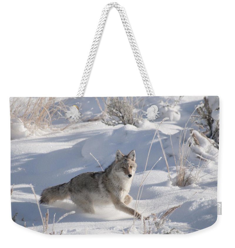 Coyote Weekender Tote Bag featuring the photograph Coyote On The Move by Gary Beeler