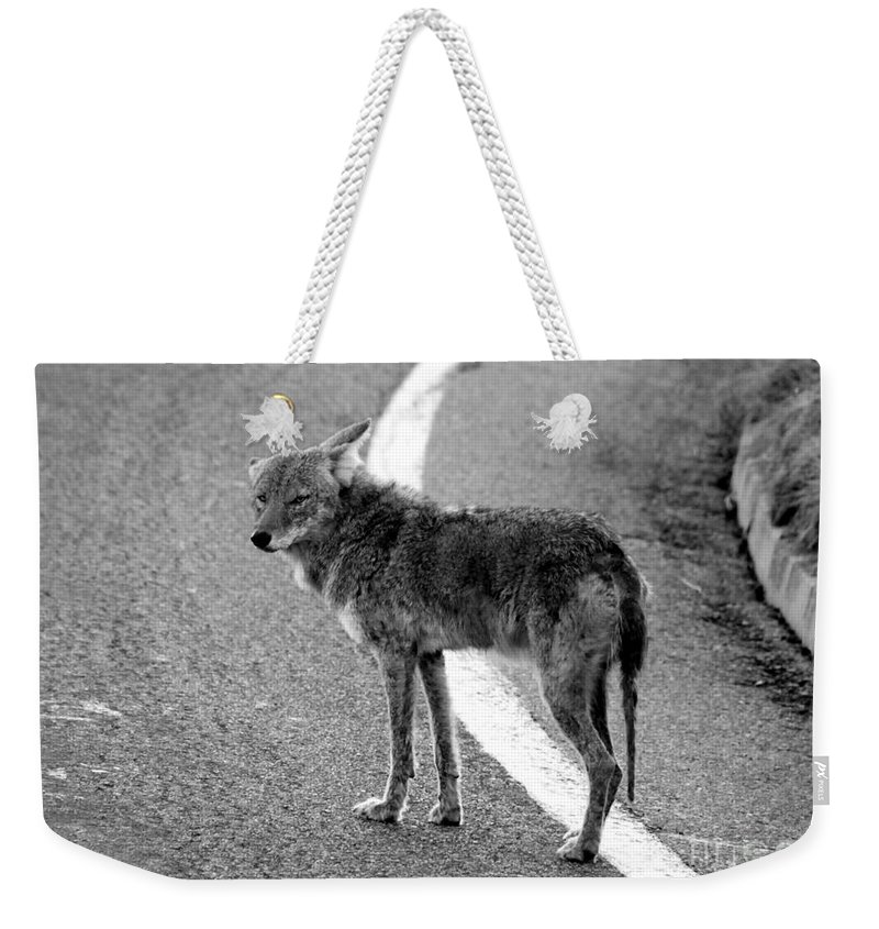 Coyote Weekender Tote Bag featuring the photograph Coyote On The Road by David Lee Thompson