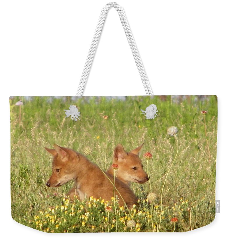Pup Weekender Tote Bag featuring the photograph Coyote Pups by Gale Cochran-Smith