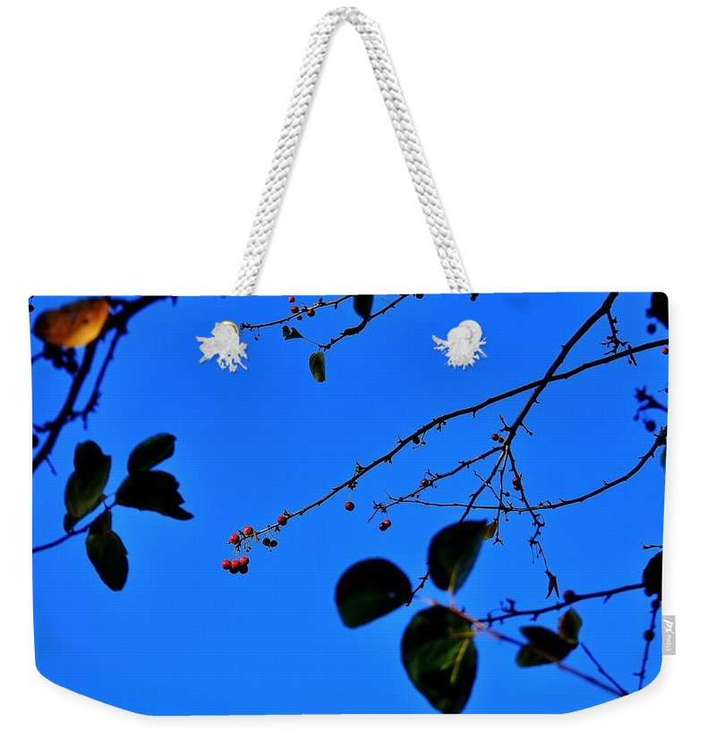 Fall Weekender Tote Bag featuring the photograph Crab Apples Blue Sky 6510 by Jerry Sodorff