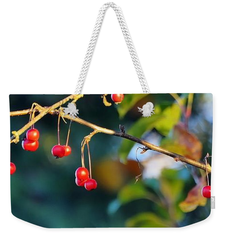 Fall Weekender Tote Bag featuring the photograph Crab Apples Branches P 6543 by Jerry Sodorff