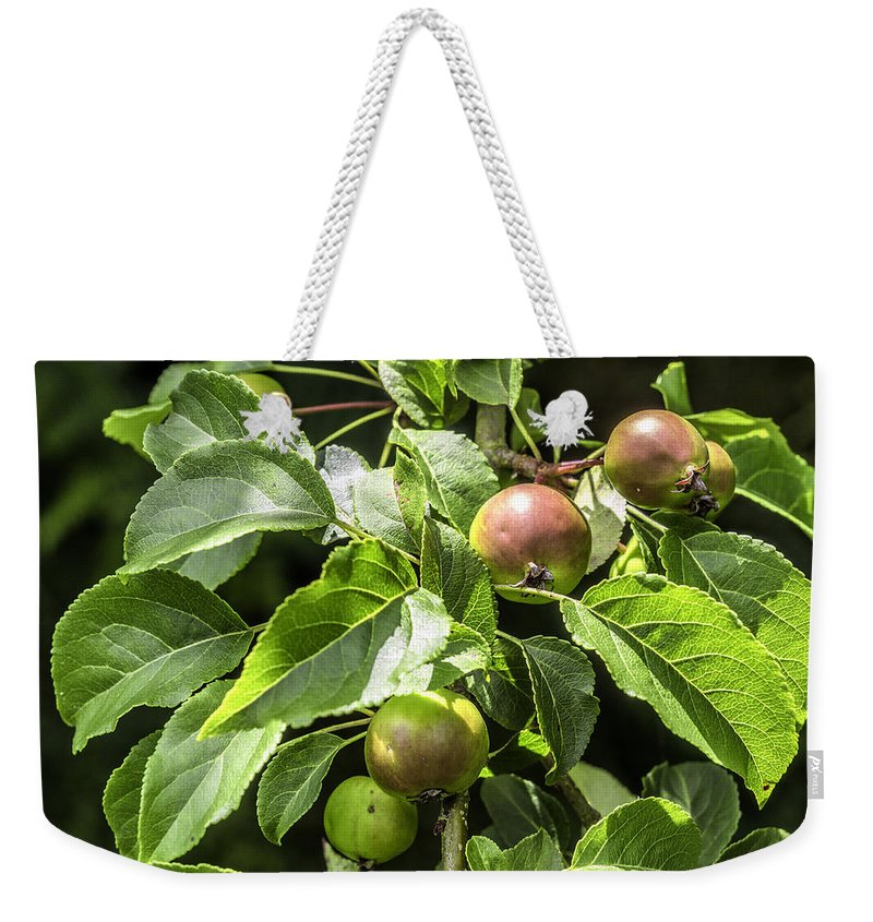 Apples Weekender Tote Bag featuring the photograph Crab Apples by Nick Bywater