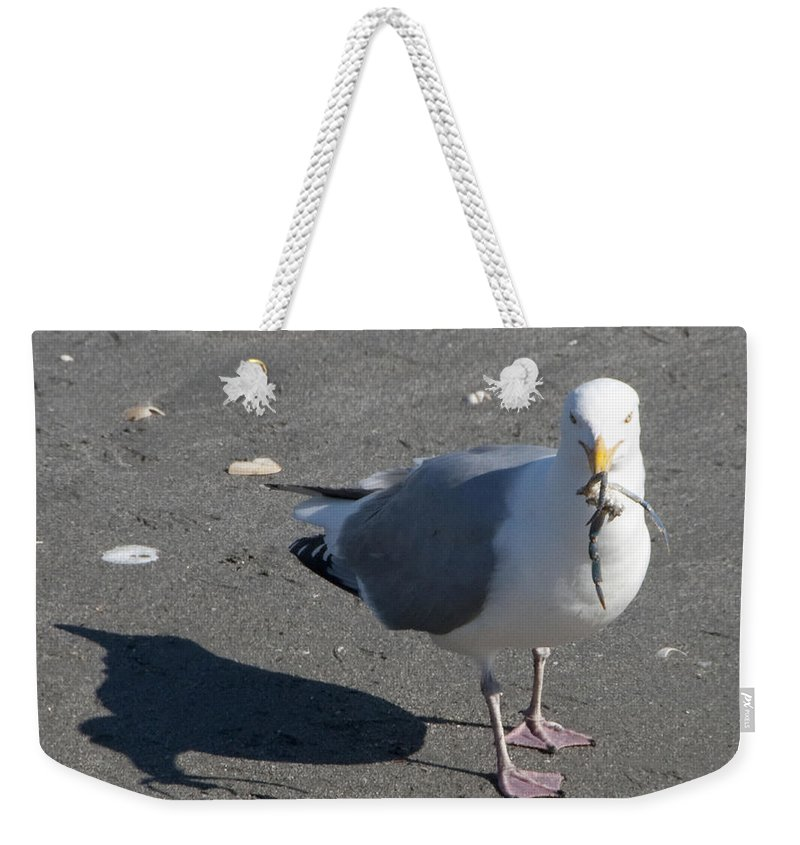 Seagull Weekender Tote Bag featuring the photograph Crab Plate by Steven Natanson