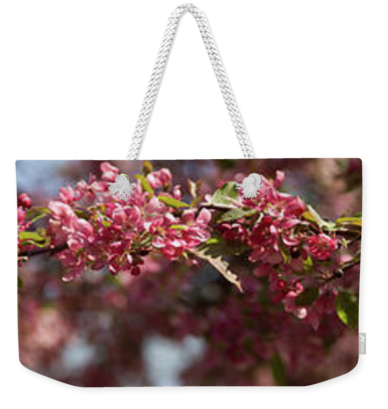 Crabapple Weekender Tote Bag featuring the photograph Crabapple in spring panoramic by Michael Bessler