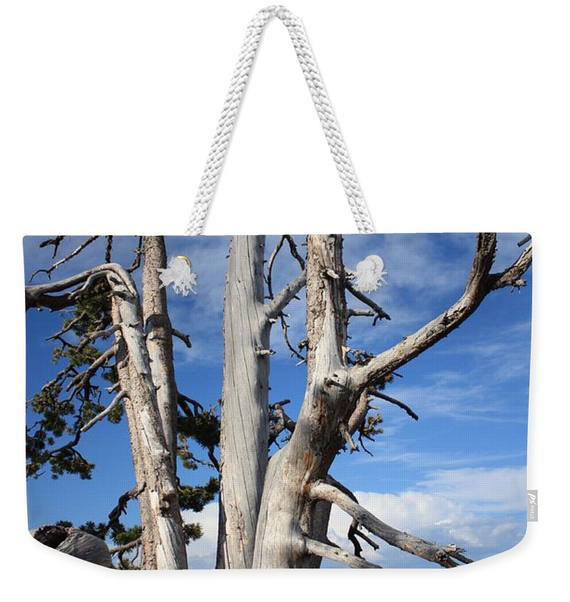 Tree Weekender Tote Bag featuring the photograph Crater Lake Tree by Carol Groenen