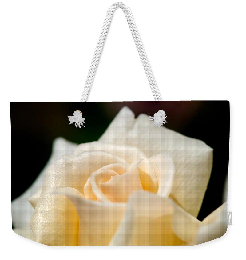Lisa Knechtel Weekender Tote Bag featuring the photograph Cream Rose Kisses by Lisa Knechtel