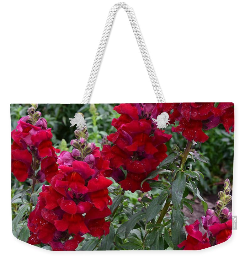 Snapdragons Weekender Tote Bag featuring the photograph Crimson Snapdragons by Robert VanDerWal