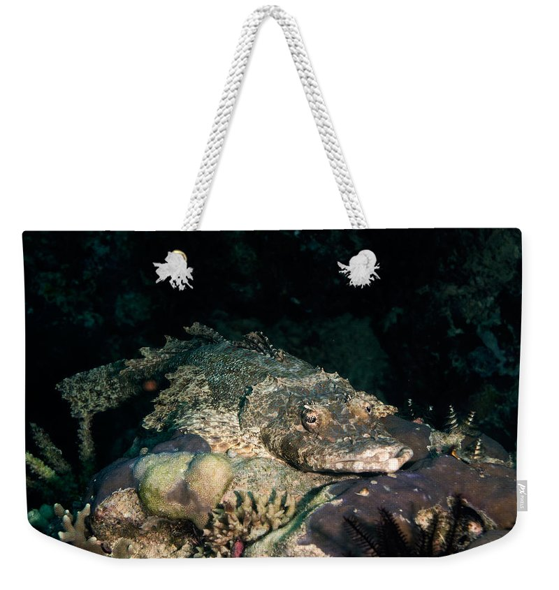 Diving Weekender Tote Bag featuring the photograph Crocodile Fish On Coral by Mumbles and Grumbles