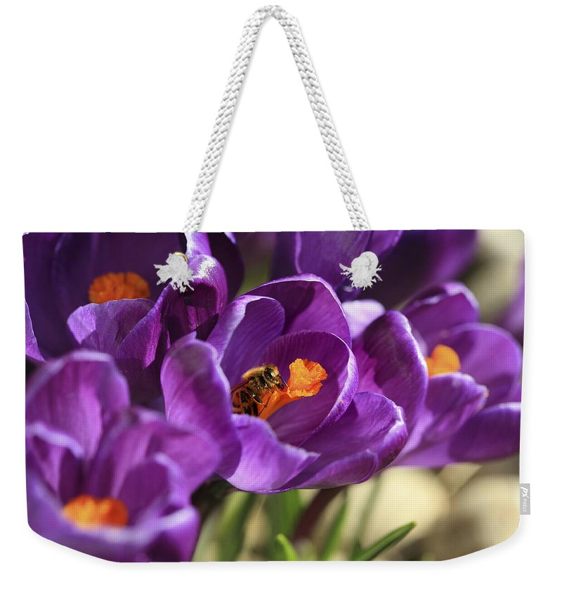 Bee Weekender Tote Bag featuring the photograph Crocus And Bee by Marilyn Hunt