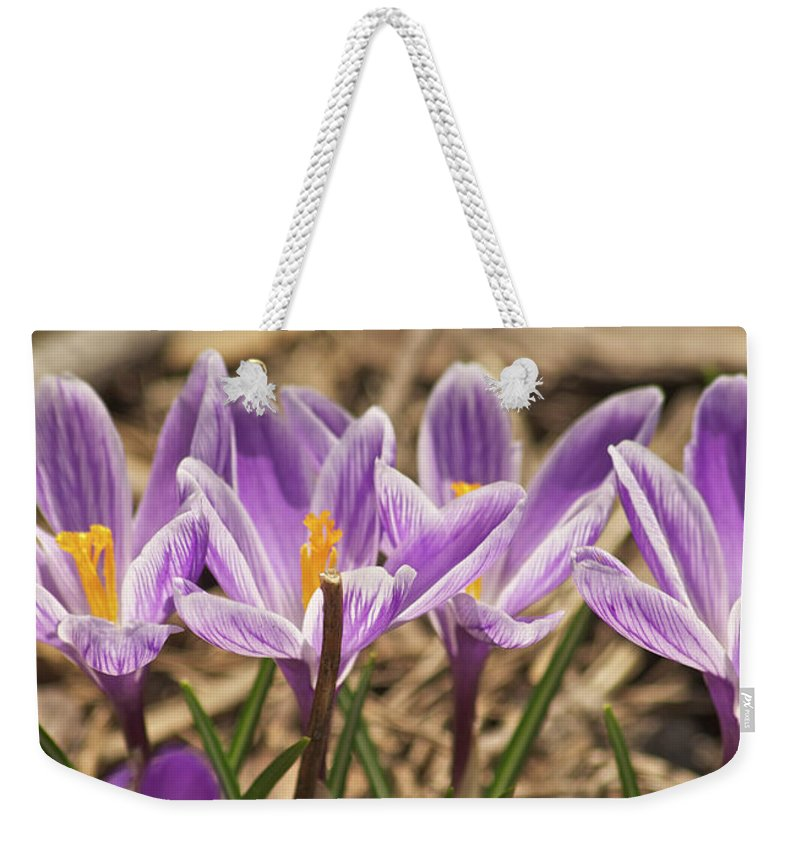 Crocus Weekender Tote Bag featuring the photograph Crocuses 2 by Michael Peychich