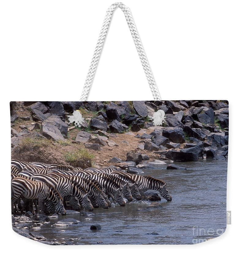 Zebras Weekender Tote Bag featuring the photograph Crossing The Mara River by Sandra Bronstein