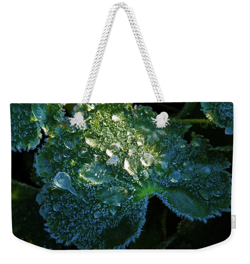 Crystal Weekender Tote Bag featuring the photograph Crystal Lady's Mantle by Douglas Barnett