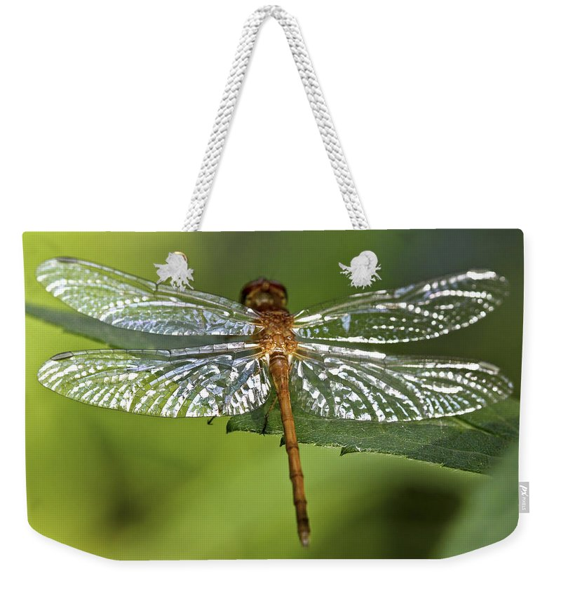 Bug Weekender Tote Bag featuring the photograph Crystal Wings by Evelina Kremsdorf