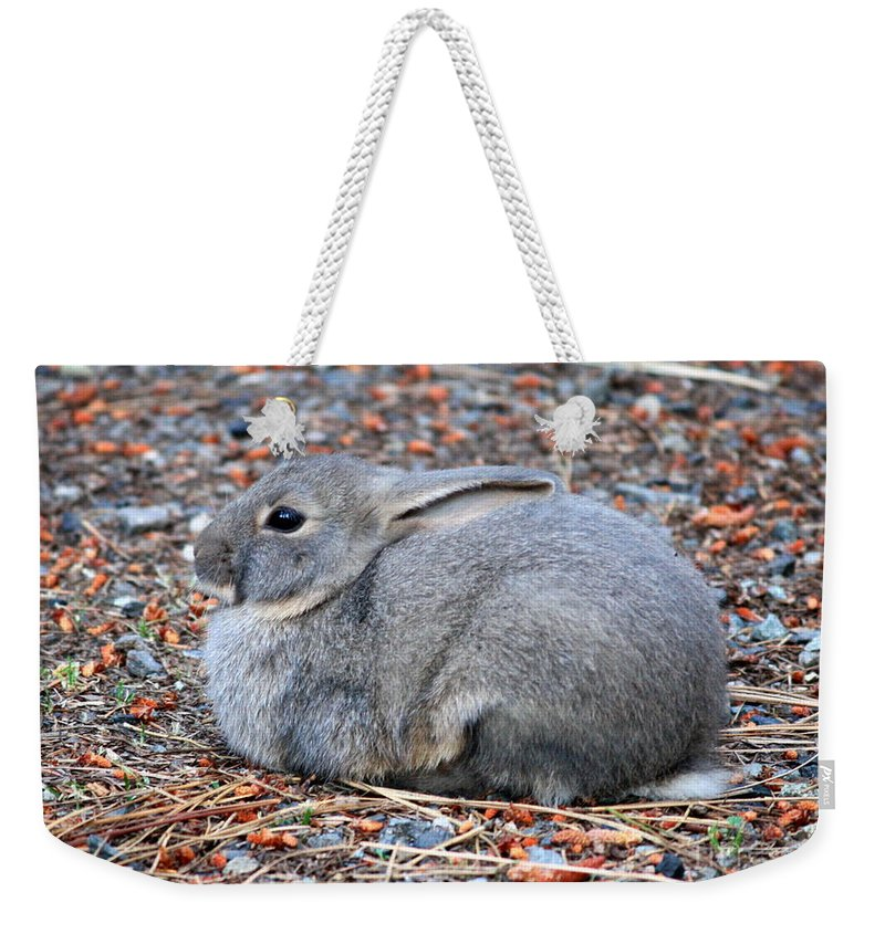Rabbit Weekender Tote Bag featuring the photograph Cuddly Campground Bunny by Carol Groenen