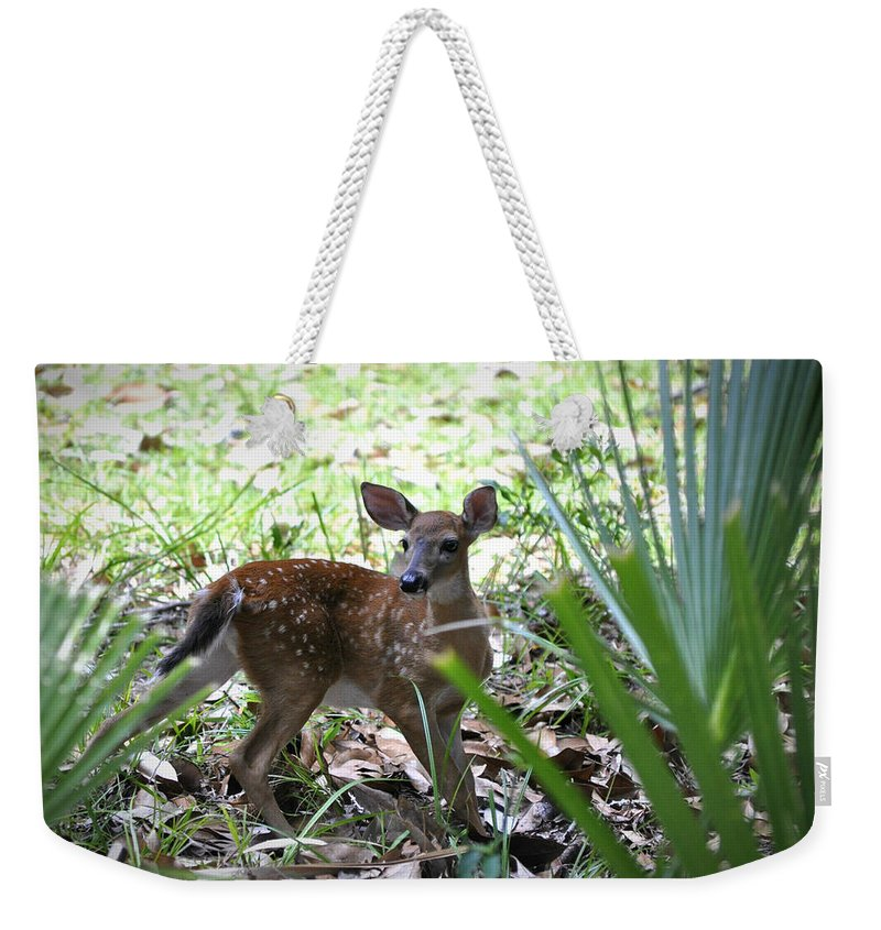 Animals Weekender Tote Bag featuring the photograph Cumberland Island Deer by Debra White