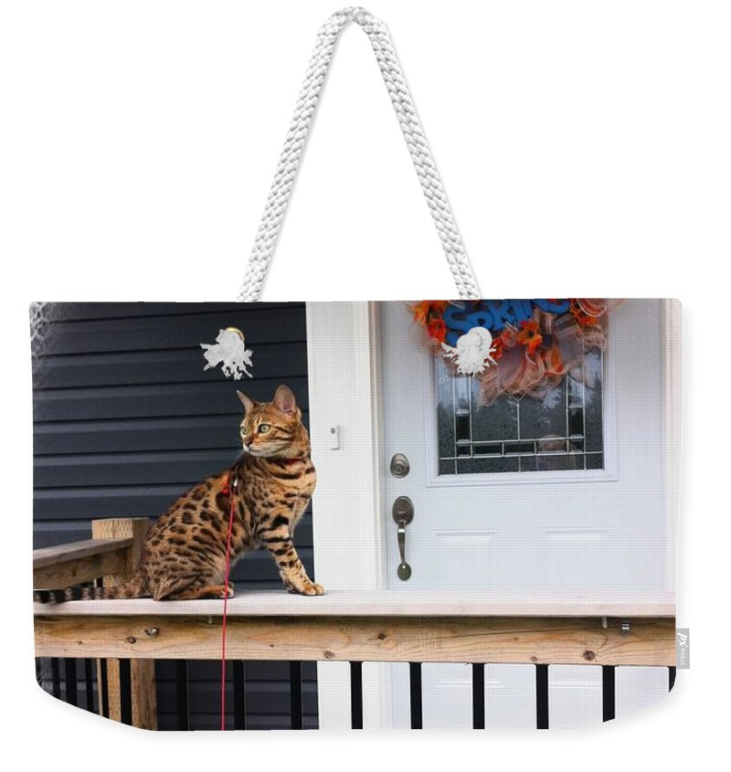 Curious Bengal Cat Weekender Tote Bag featuring the photograph Curious Bengal Cat by Barbara Griffin