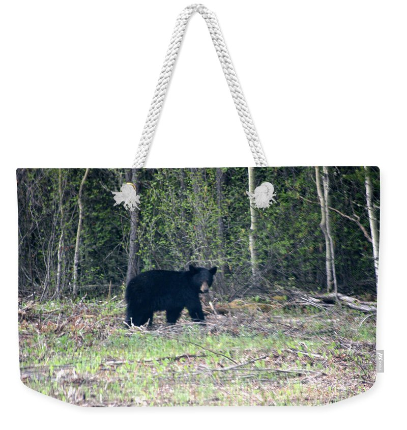 Black Bear Nature Wild Animal Trees Forest Rainbow Lodge Piprell Lake Saskatchewan Weekender Tote Bag featuring the photograph Curious Black Bear by Andrea Lawrence