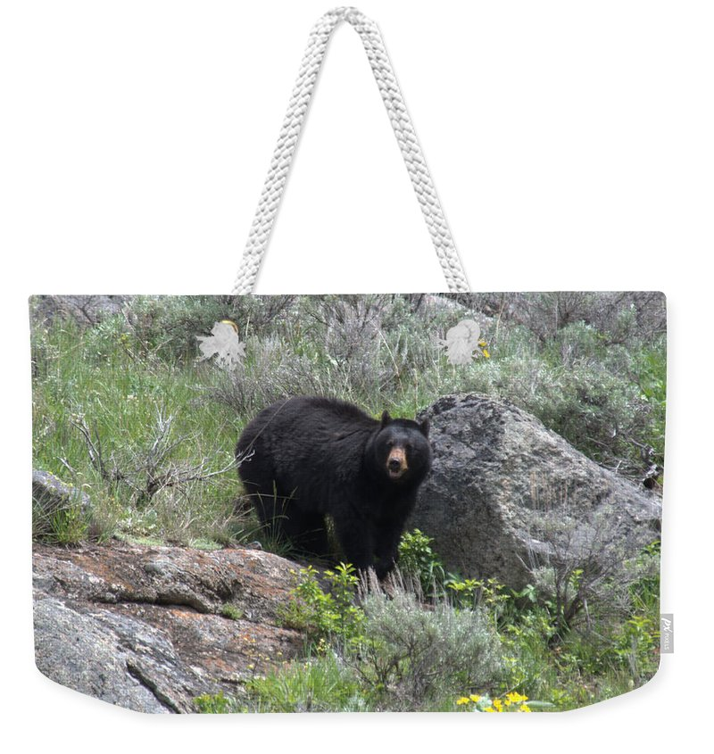 Black Bear Weekender Tote Bag featuring the photograph Curious Black Bear by Frank Madia