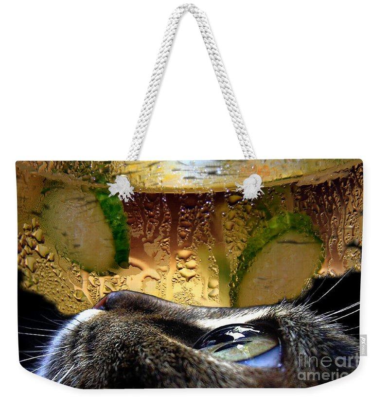 Cat Weekender Tote Bag featuring the photograph Curious Cat.. by Jolanta Anna Karolska