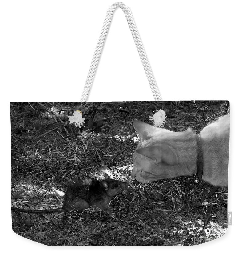 T Weekender Tote Bag featuring the photograph Curious by David Lee Thompson