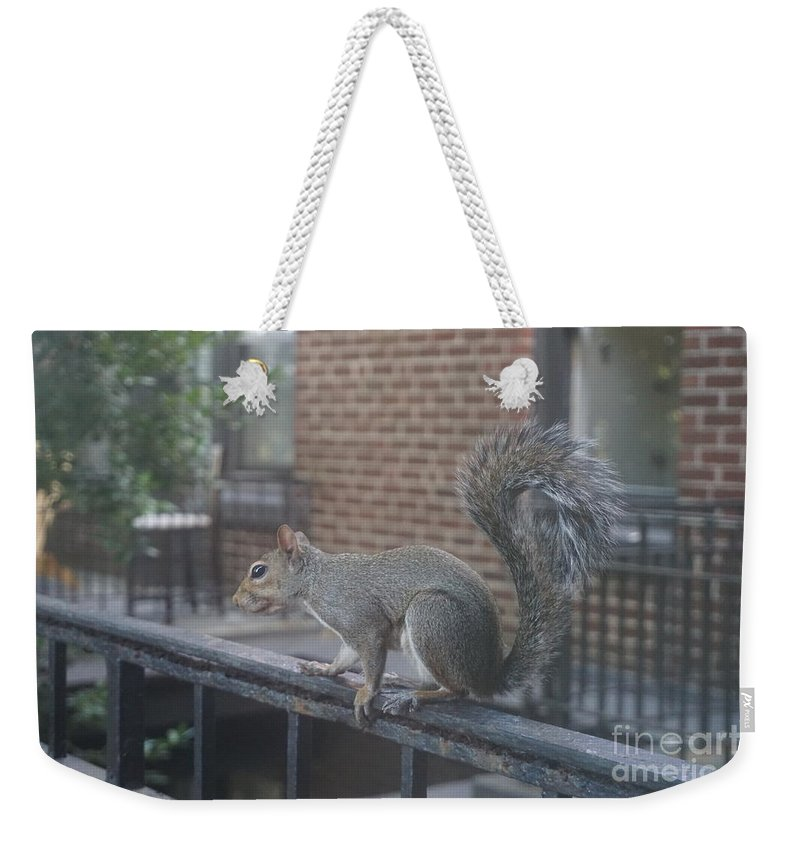 Squirrel Weekender Tote Bag featuring the photograph Curious Gray Squirrel by Kathryn Jinae