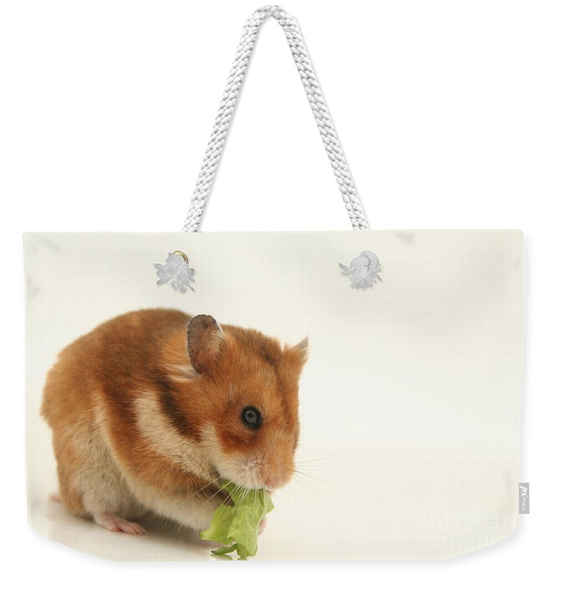 Hamster Weekender Tote Bag featuring the photograph Curious Hamster by Yedidya yos mizrachi