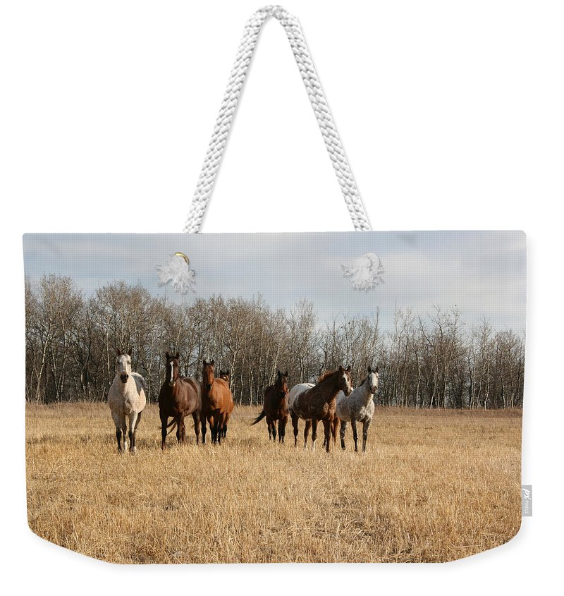 Horses Herd Animals Ranch Cowboy Appaloosa Quarter Horse Mares Pasture Field Grass Weekender Tote Bag featuring the photograph Curious Horses by Andrea Lawrence