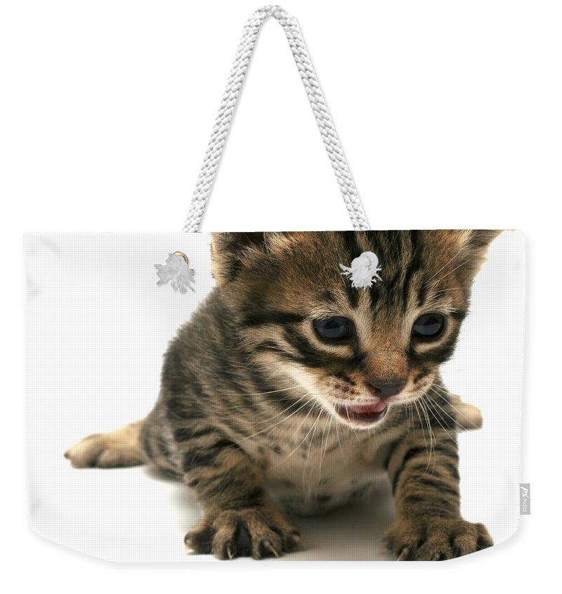 Cat Weekender Tote Bag featuring the photograph Curious Kitten by Yedidya yos mizrachi