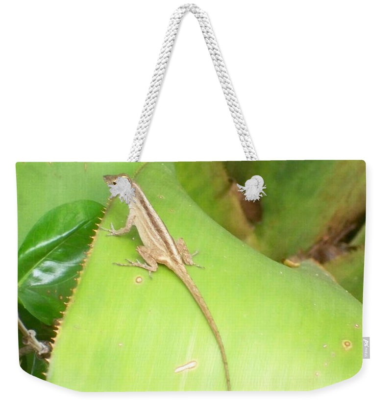 Florida Weekender Tote Bag featuring the photograph Curious Lizard I by Chris Andruskiewicz