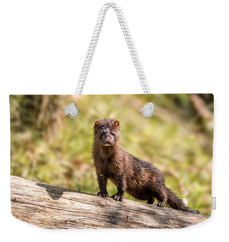 Mink Weekender Tote Bag featuring the photograph Curious Mink by Michael Barron