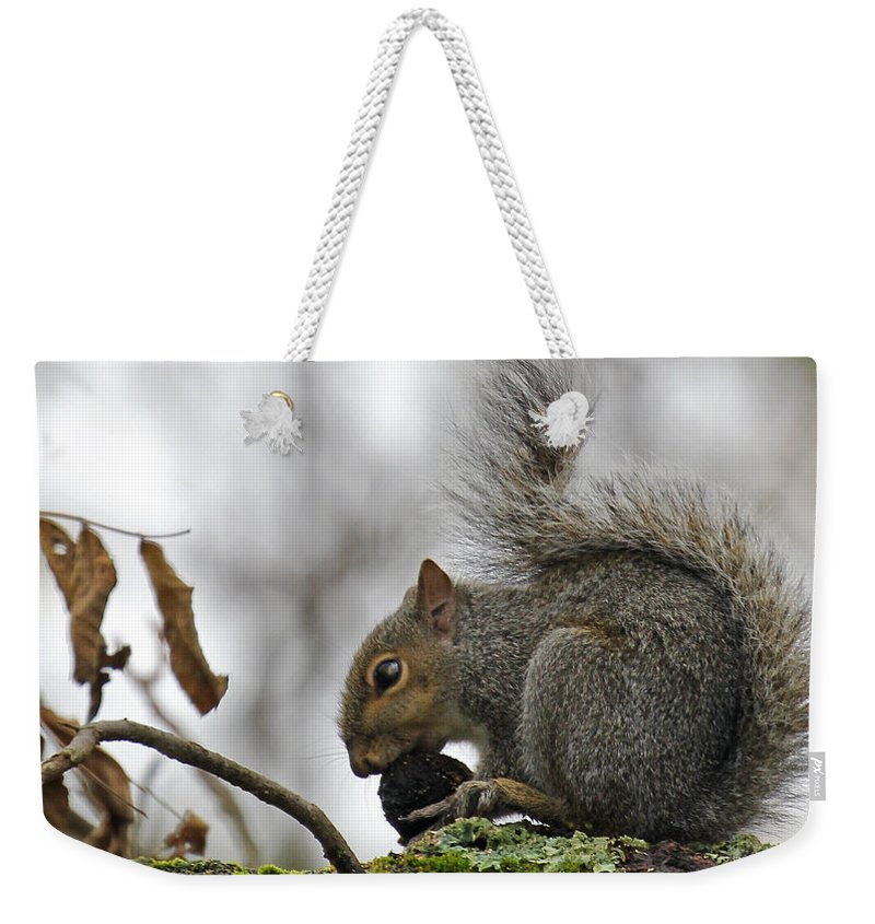 Curled Tail. Squirrel Weekender Tote Bag featuring the photograph Curled Tail by Jennifer Robin