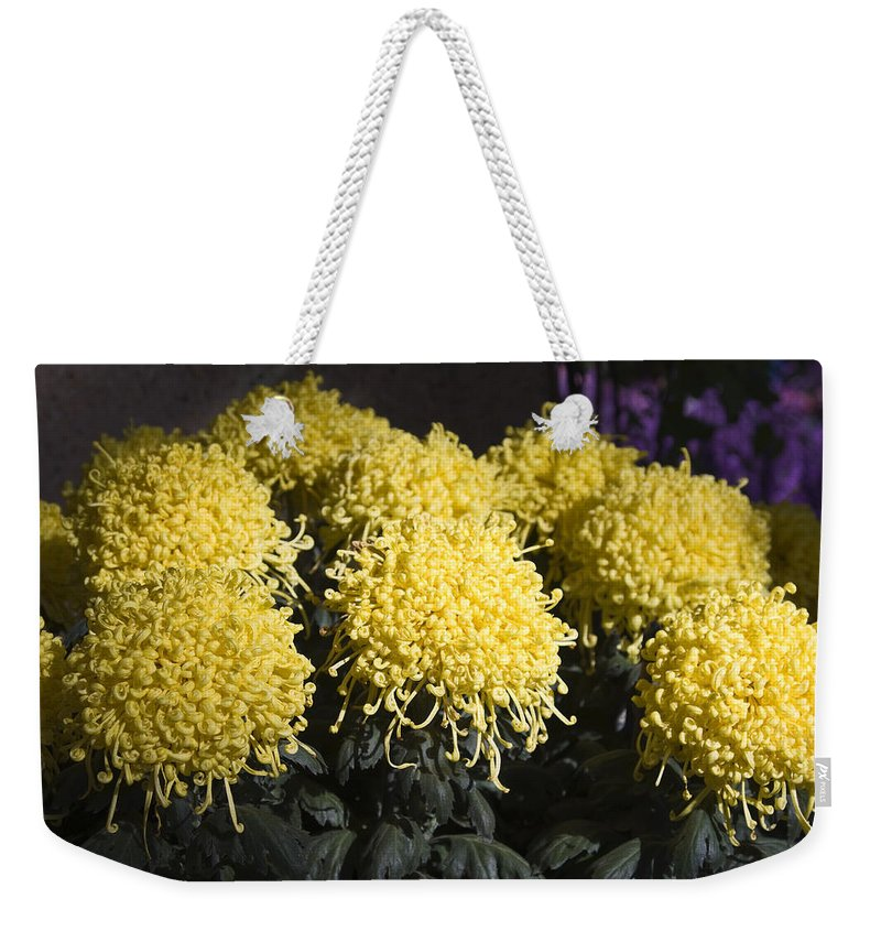 Large Curly Yellow Mums Weekender Tote Bag featuring the photograph Curly Mums by Sally Weigand