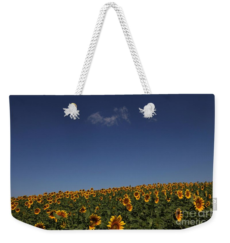 Sunflowers Weekender Tote Bag featuring the photograph Curvature by Amanda Barcon