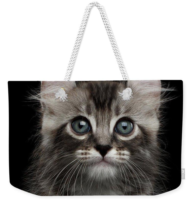 Kittens Weekender Tote Bags