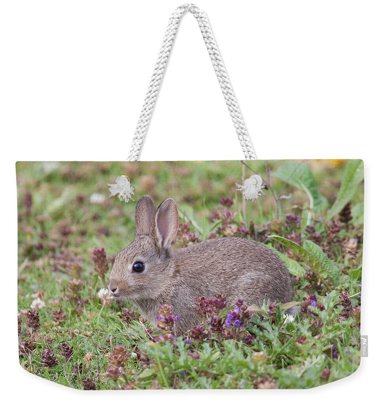 Wildlife Weekender Tote Bag featuring the photograph Cute Baby Bunny by Bob Kemp