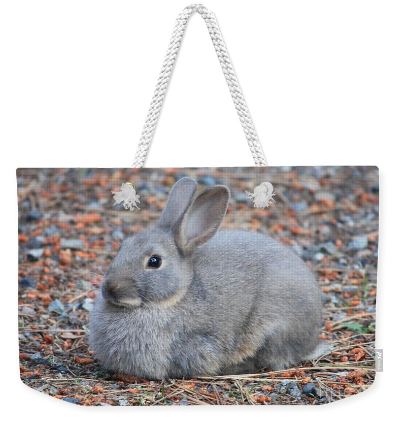Rabbit Weekender Tote Bag featuring the photograph Cute Campground Rabbit by Carol Groenen