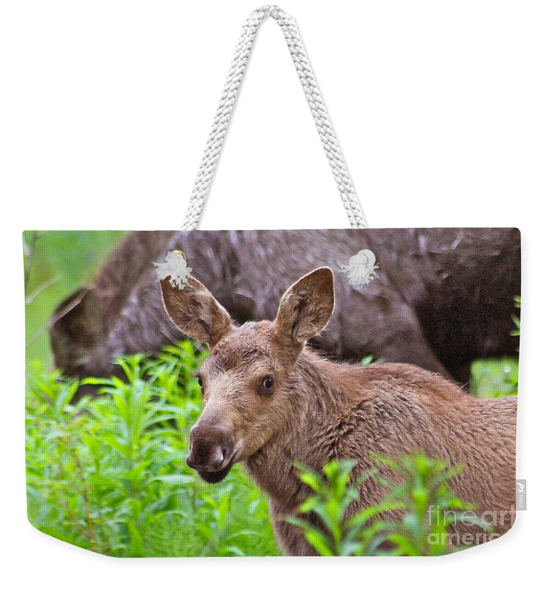 Moose Weekender Tote Bag featuring the photograph Cute by Rick Monyahan