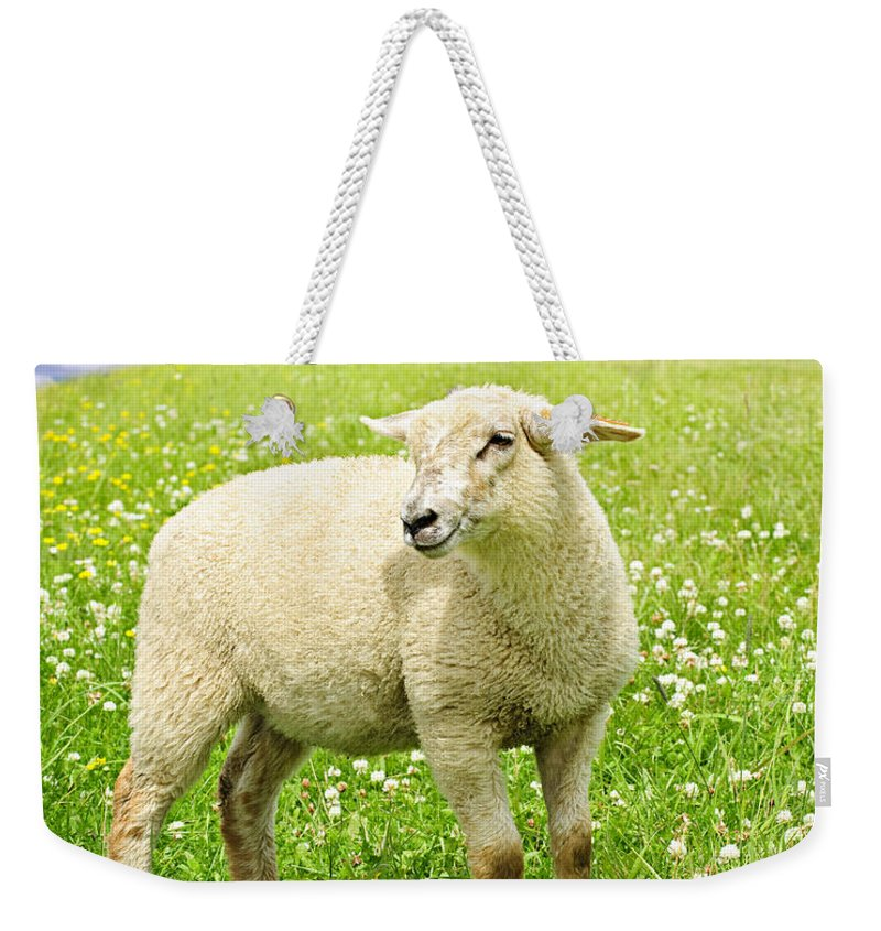 Sheep Weekender Tote Bag featuring the photograph Cute Young Sheep by Elena Elisseeva
