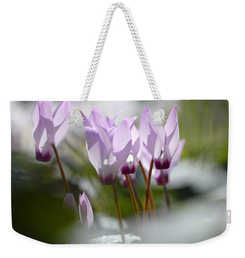 Cyclamen At Lachish 1 Weekender Tote Bag featuring the photograph Cyclamen At Lachish 1 by Dubi Roman